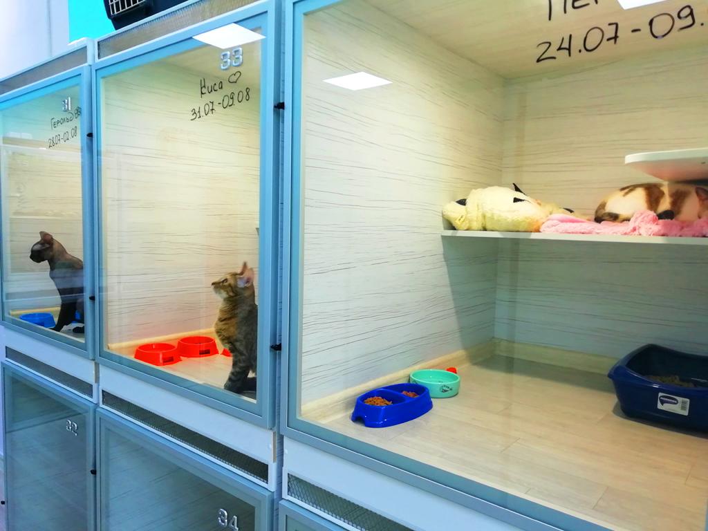 Гостиница для кошек. Выручка 400.000 рублей!